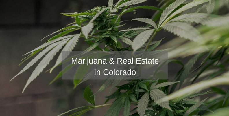 Marijuana and Real Estate: What You Should Know About Buying